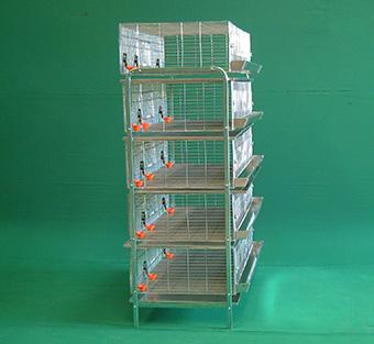Bateria-Iniciacion-para-pollas-5-niveles-de-1.16m-2