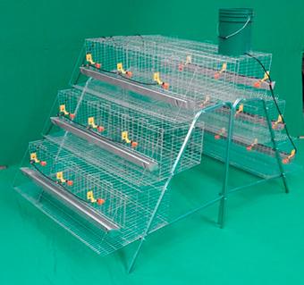 bateria-para-gallinas-en-piramide-de-1.5m-3niveles-3secciones